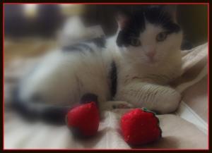 Kot i zabawki z filcu